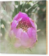 Cactus Flower Wood Print