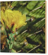 Cactus Flower H28 Wood Print
