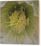 Cactus Flower Macro Wood Print