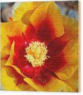 Cactus Flower V Wood Print