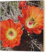 Cactus Flower Twins Wood Print