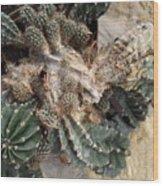 Cactus Fractals Wood Print