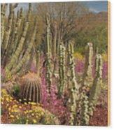 Cactus Garden II Wood Print