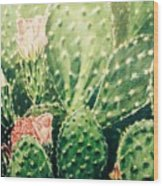 Cactus In Blossom  Wood Print
