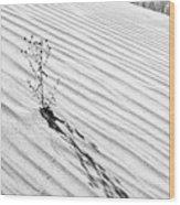 Cactus In Desert Wood Print
