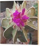 Cactus In Flower Wood Print