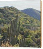 Cactus In The Desert  Wood Print