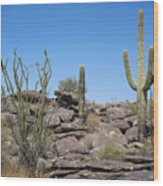 Cactus Land Wood Print