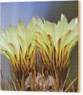 Cactus Life Wood Print