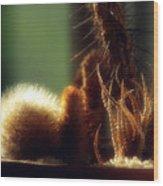 Cactus Light Wood Print
