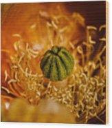 Cactus Pistil Wood Print