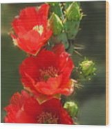 Cactus Red Beauty Wood Print