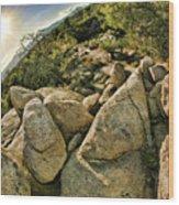Cactus Rock Wood Print