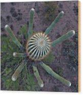 Cactus, Saguaro Long Armed Wood Print