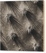 Cactus Shadows Wood Print