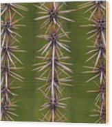 Cactus Spines Wood Print