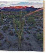 Cactus Sun Beam Wood Print
