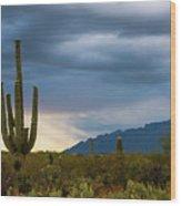 Cactus Sunset Saguaro National Park Arizona Wood Print