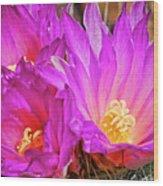 Cactus-thelocactus Macdowellii Wood Print