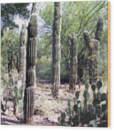 Cactus West Wood Print