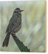 Cactus Wren 0295 Wood Print