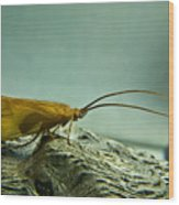 Caddisfly Wood Print