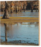 Caddo Lake 2016 Wood Print