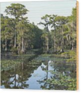 Caddo Lake Wood Print