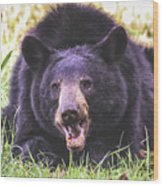 Cades Cove Black Bear Wood Print