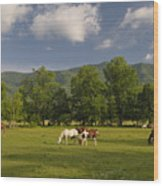 Cades Cove Horses In Smoky Mountains Tennessee Usa Wood Print