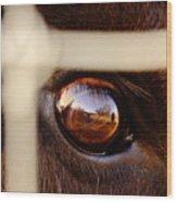 Caged Buffalo Reflects Wood Print