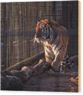 Caged King Of The Jungle Wood Print