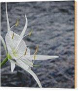 Cahaba Lily #1 Wood Print