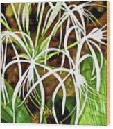 Cahaba Lily In Huntington Botanical Gardens In San Marino-california Wood Print