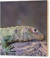 Caiman Lizard Wood Print