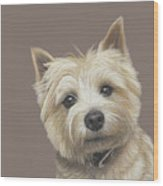 Cairn Terrier - Dave Wood Print