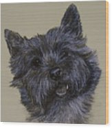 Cairn Terrier Wood Print