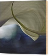 Cala Lily Curl Wood Print
