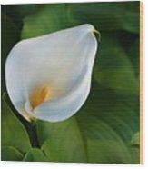 Cala Lily Wood Print