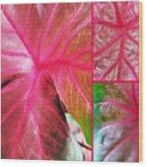 Caladium Red Trio Wood Print