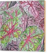 Caladiums Tropical Plant Art Wood Print