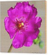 Calandrinia Flower Wood Print
