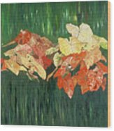 Caldium Forest Wood Print