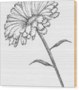 Calendula Wood Print by Christy Beckwith