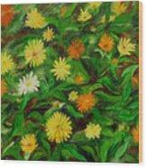 Calendula Wood Print