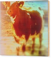 This Calf Has A Hope For A Long And Happy Life But How And When Will It End   Wood Print