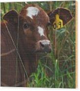 Calf Nineteen Wood Print