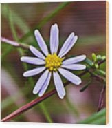 Calico Aster Wood Print