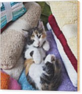Calico Kitten On Towels Wood Print