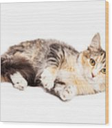 Calico Kitty Laying Over White Wood Print